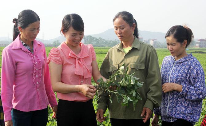 Phát triển đảng viên nữ khu vực nông thôn và thành thị: Chủ động công tác tạo nguồn